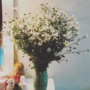la marguerite Lhiver  Hanoi est commence par cette fleur