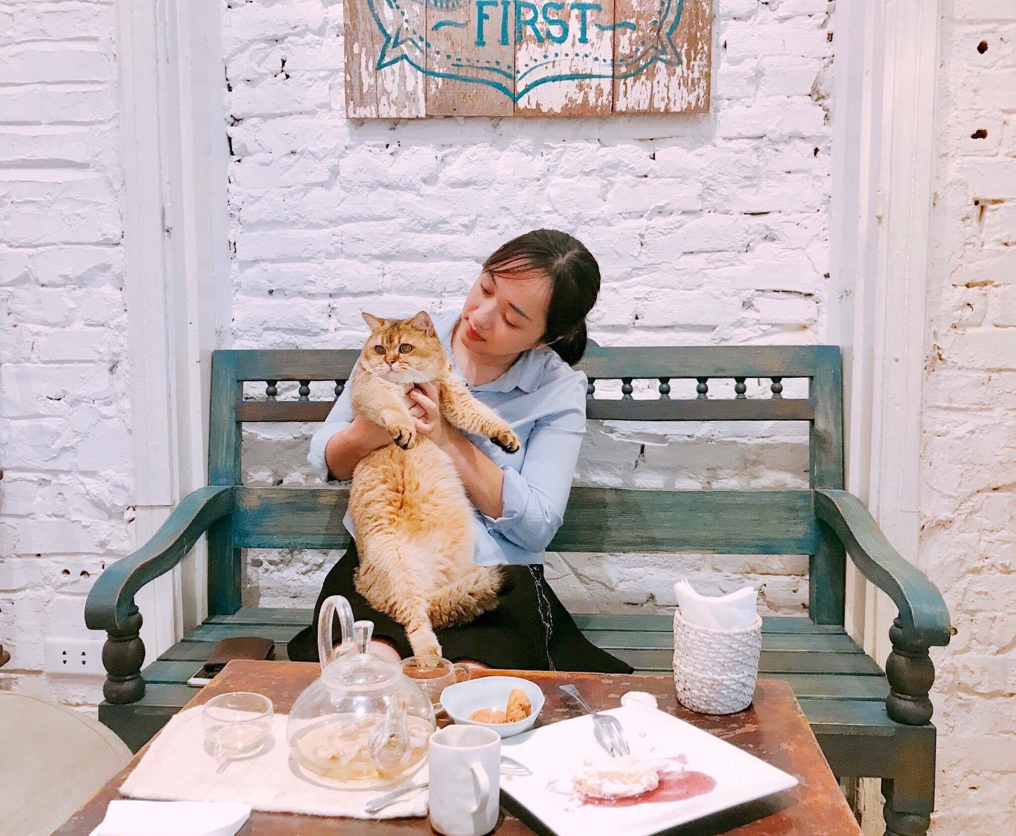 Hãy yêu như một chú mèo