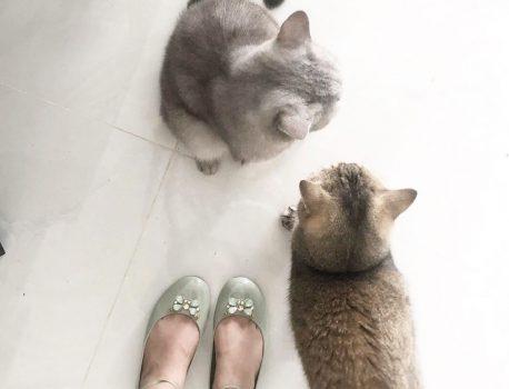 Những điều cần biết khi mới nuôi mèoooo
